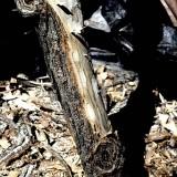 log debarker