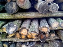 how to choose firewood